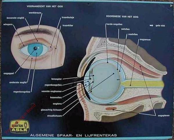 Vooraanzicht van het oog. Doorsnede van het oog
